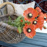 WSH179_Poppy_orange_2